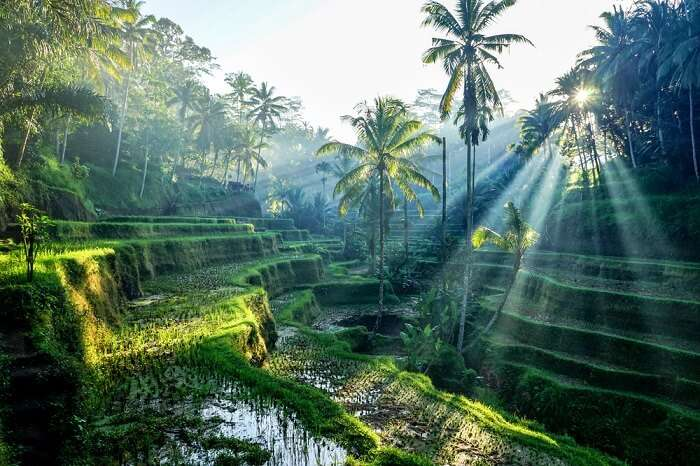 Places To Visit In Cengiling in Bali With Kids cover