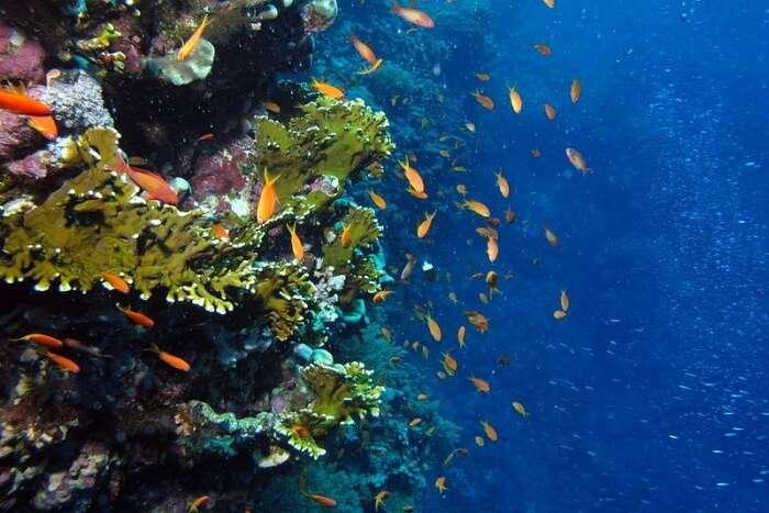 Explore The Gorgeous Balinese Marine Life