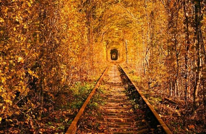 Tunnel of Love View In Ukraine