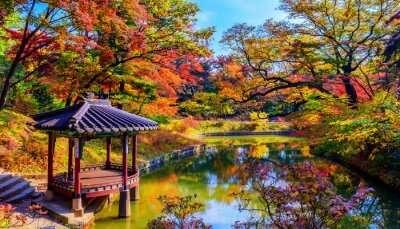 Awesome Autumn In Korea
