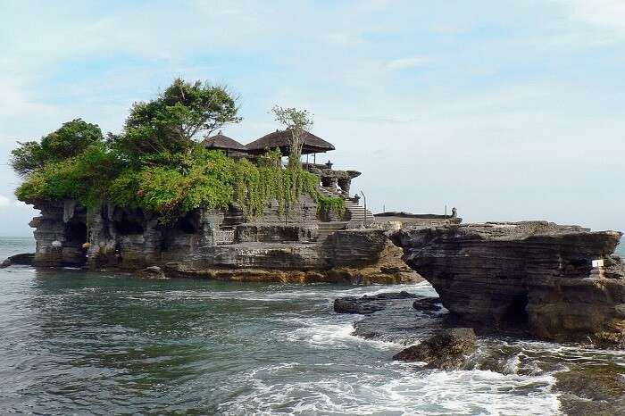 Magic Tree Bali