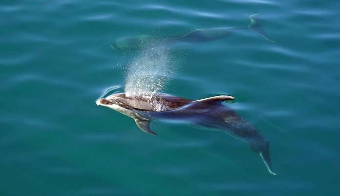Andaman Dolphin Cruise
