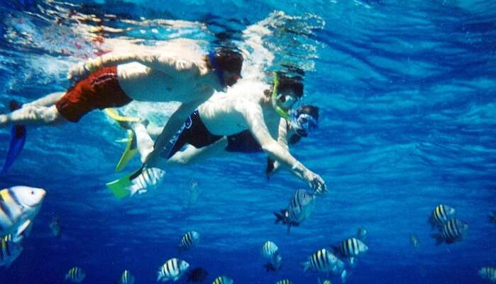 Best Time To Go For Snorkeling In Aqaba