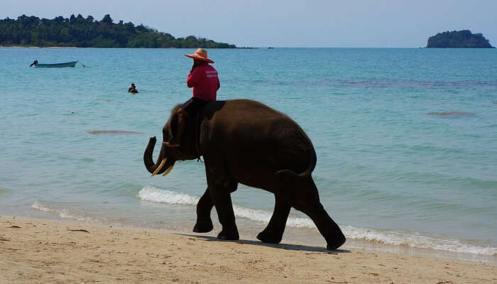 Best Time To Visit Elephant Beach
