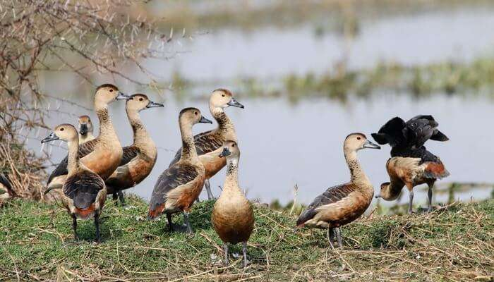 Bird Watching - Attidiya Bird Sanctuary