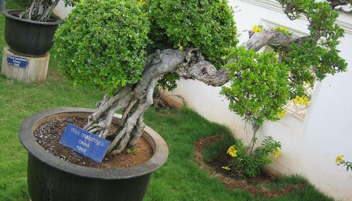 Bonsai Garden in Mysore