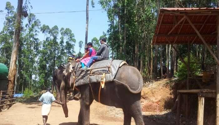 Elephant View