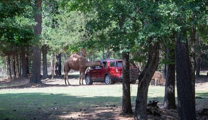 Cherokee Trace Drive-thru Safari