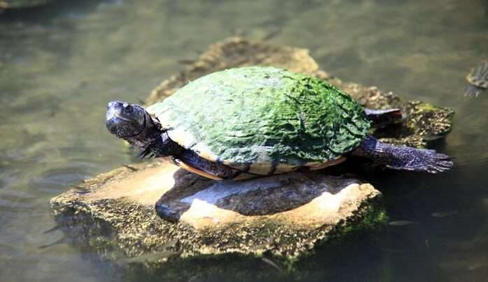 Colorado River Park Wildlife Sanctuary