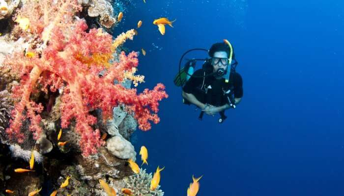Adventurous Scuba Diving In Bahamas