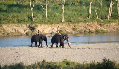 Darjeeling Wildlife