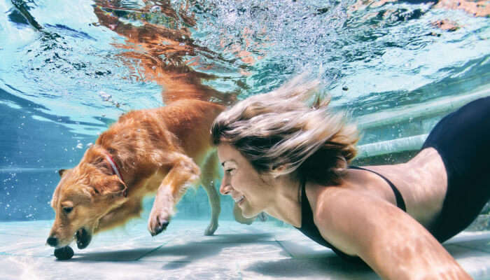 Dogs Are Great Swimmers