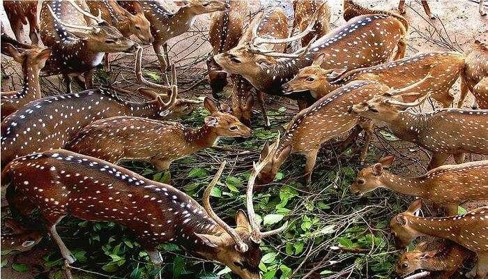 Enjoy Wildlife Interaction - Dehiwala Zoological Garden