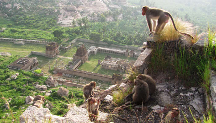 Expedition To Monkey Kingdom