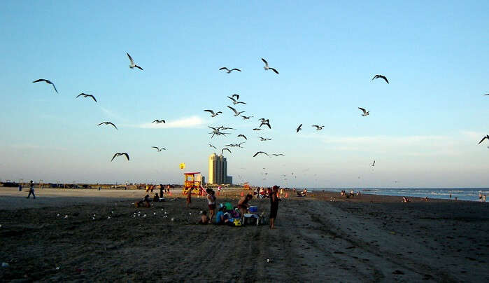 Galveston's Beaches