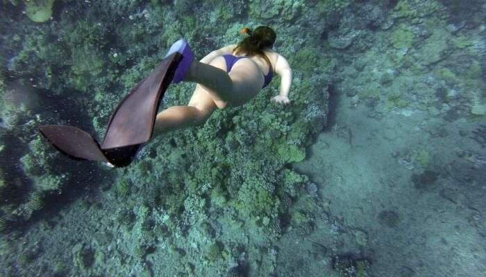 Snorkeling View