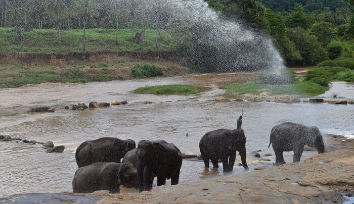 watched elephants taking bath in the river