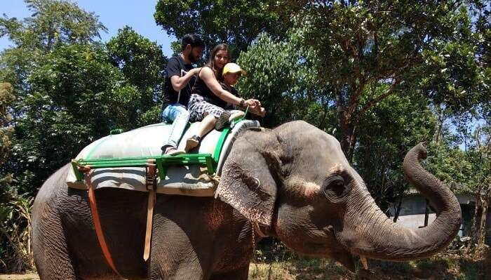 took elephant ride with kids
