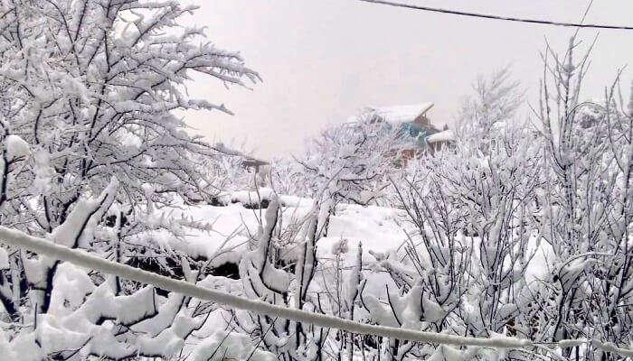 experiencing snowfall in Manali