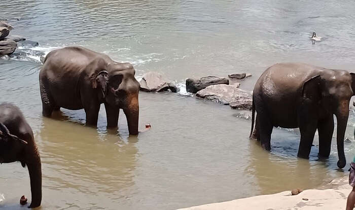 elephant orphange in sri lanka