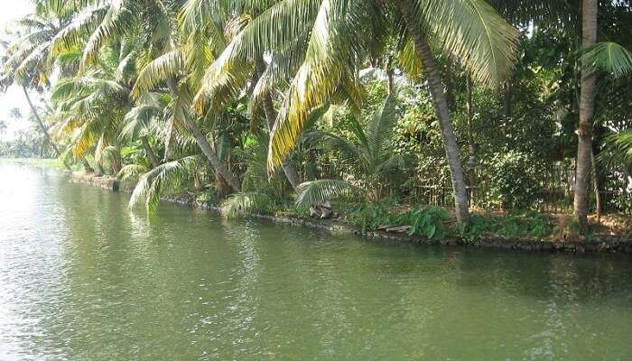Kuttanad View