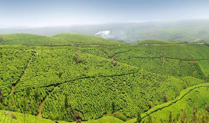 Hill View (Munnar - Kerala)