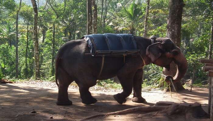 Periyar_National_Park_-_Enjoy_Elephant_Rides_