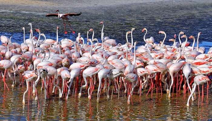 Watch flamingos