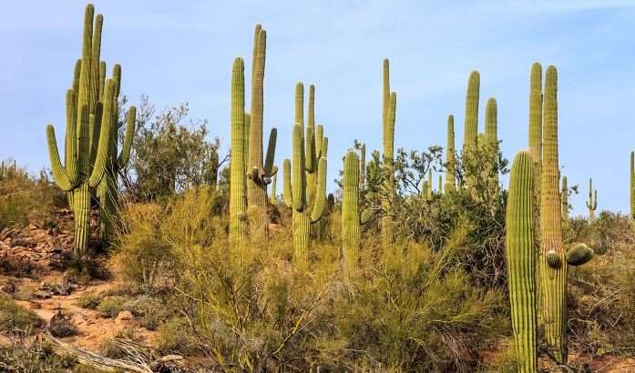 Saguaro National Monument near Tucson Arizona