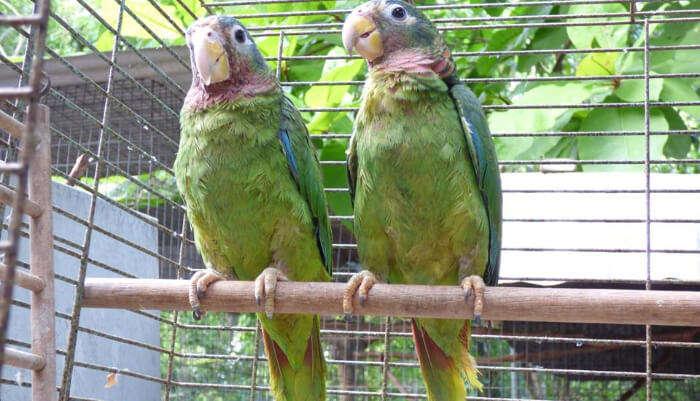 Seven Oaks Sanctuary for Wildlife