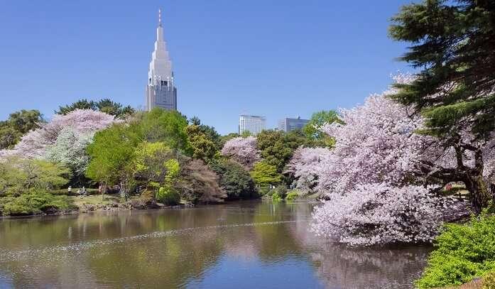 Shinjuku-Gyoen-National-Garden2