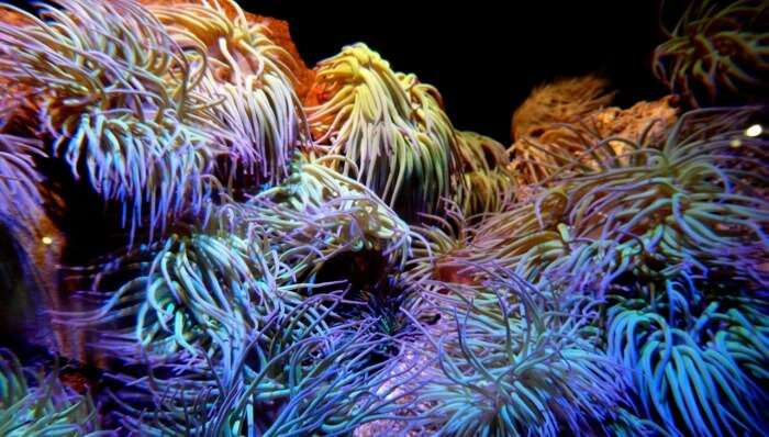 Snorkeling Amidst Corals