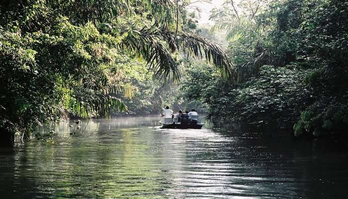 Tortuguero_National_Park_