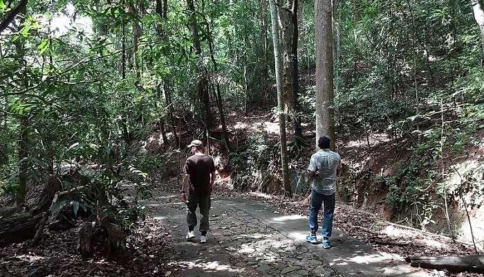 Udawatta Kele Sanctuary in Sri Lanka