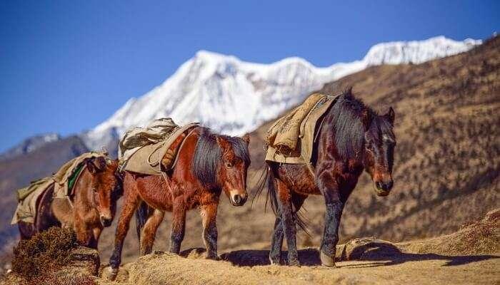 Ura In Bhutan