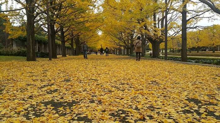 Garden Tokyo Botanical Leaf Nature Autumn