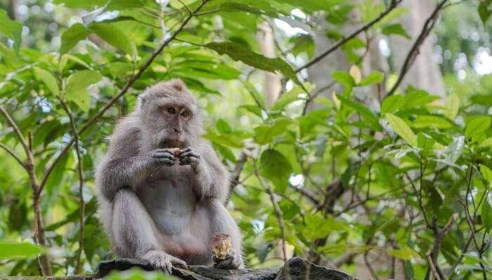 Visit The Ubud Monkey Forest