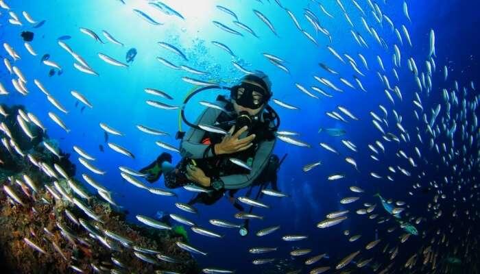 Amazing Scuba Diving In Jordan