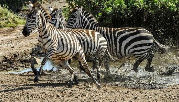 Best Zoos In Bali