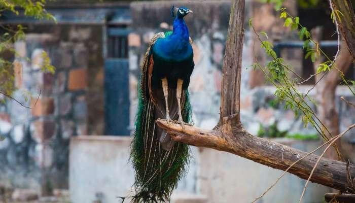 Zoo of delhi