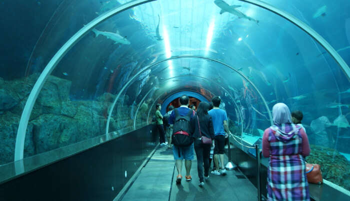 About S.E.A Aquarium In Singapore