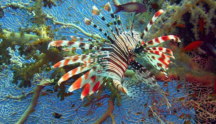 Breaker Reef