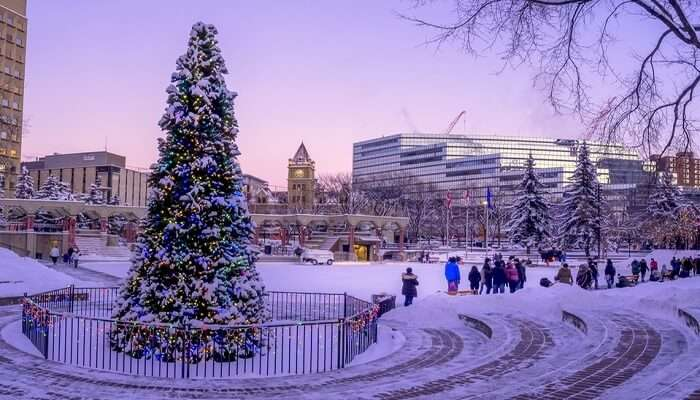 Beautiful Calgary In Winter
