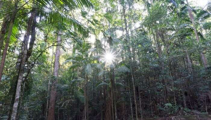 Dense Rainforests