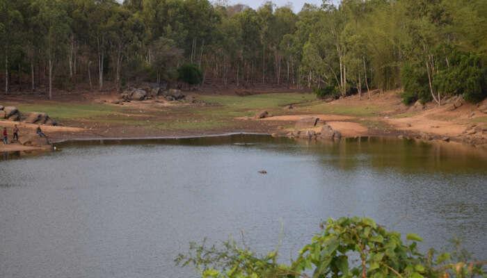 Devarayanadurga State Forest