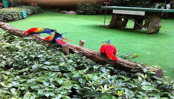Jurong Bird Park View