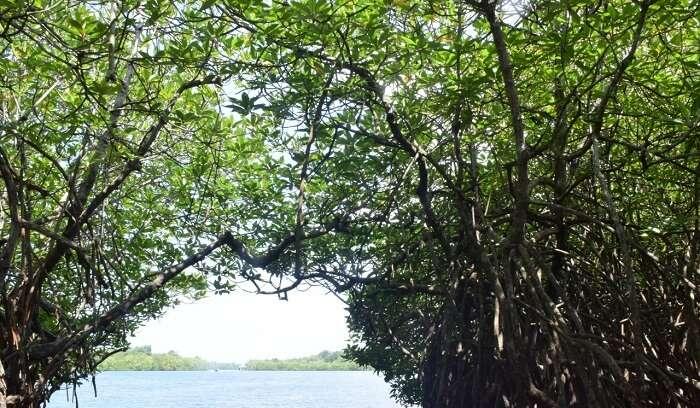 Mangroove Caves