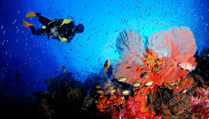 Scuba Diving In Hong Kong: 5 Must-Try Spots To Take A Dive In!