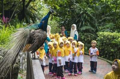 Kids watching peacock