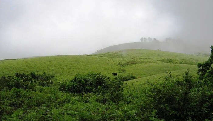 Vagamon Meadows In Vagamon